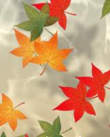 紅葉した楓が水面をゆらゆらと流れていきます。ときどき楓が上から落ちます。
